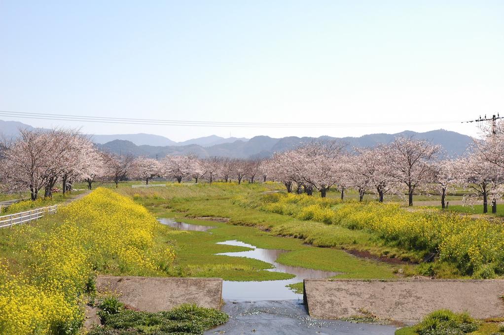 朝倉郡筑前町|福岡よかとこビジネスプランコンテスト